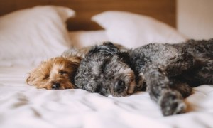 How Canine Parvovirus be  Care for dogs