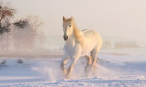 What is a horse: Answers well explained