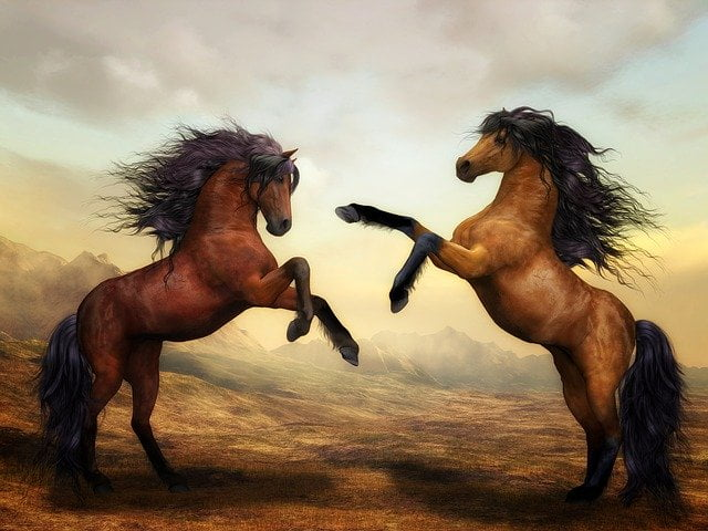 What is a horse Answers well explained