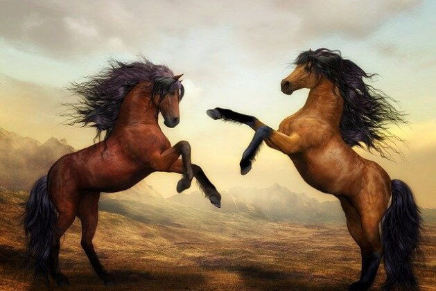 What Are Some Tips For Riding A Wild Horse? Best tips Ever